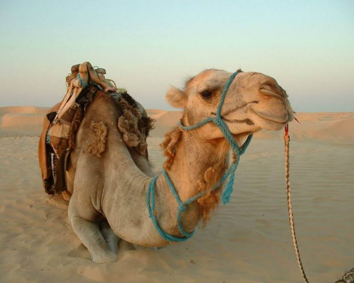 Egipt-Hurghada-2013-Karoltravel-13.jpg