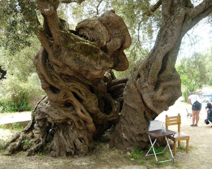 drzewo-01.jpg